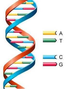 Human genome project essay