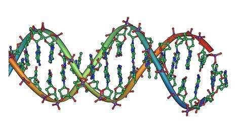 FREE Human Genome Project Essay - ExampleEssays